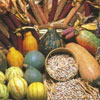 Native American foods image